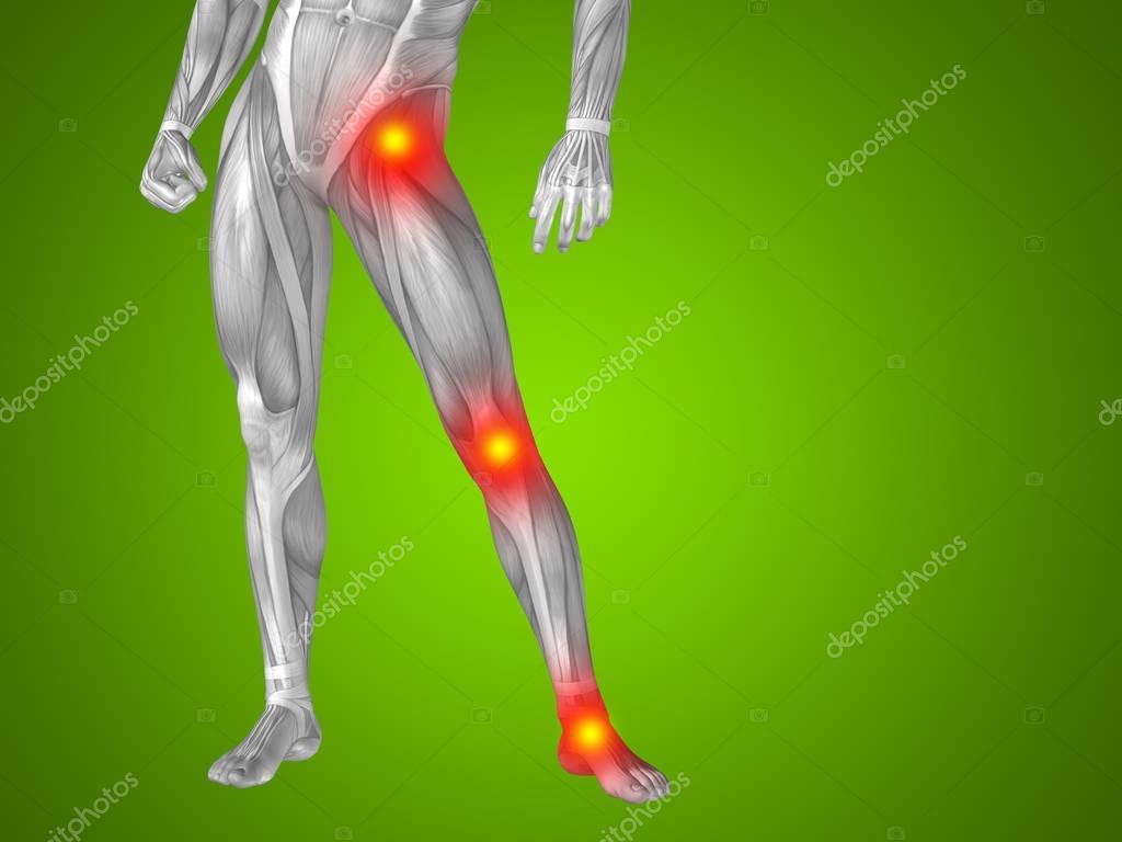 Mann menschlich Anatomie Unterkörper — Stockfoto © design36 #129346188