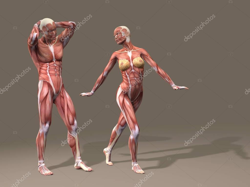 Frau und Mann mit Muskeln — Stockfoto © design36 #129347234