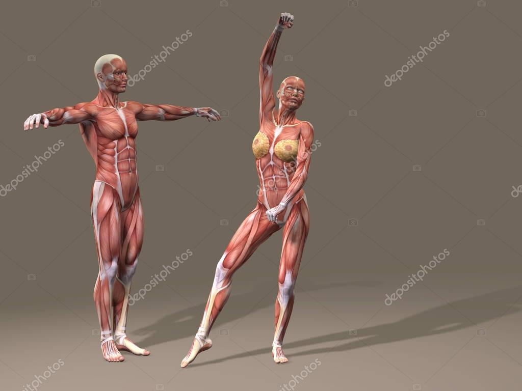 Frau und Mann mit Muskeln — Stockfoto © design36 #129351404