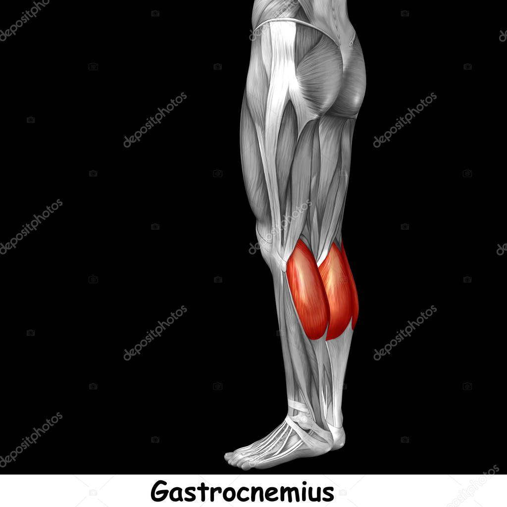 Anatomía de las piernas más baja — Fotos de Stock © design36 #129358940