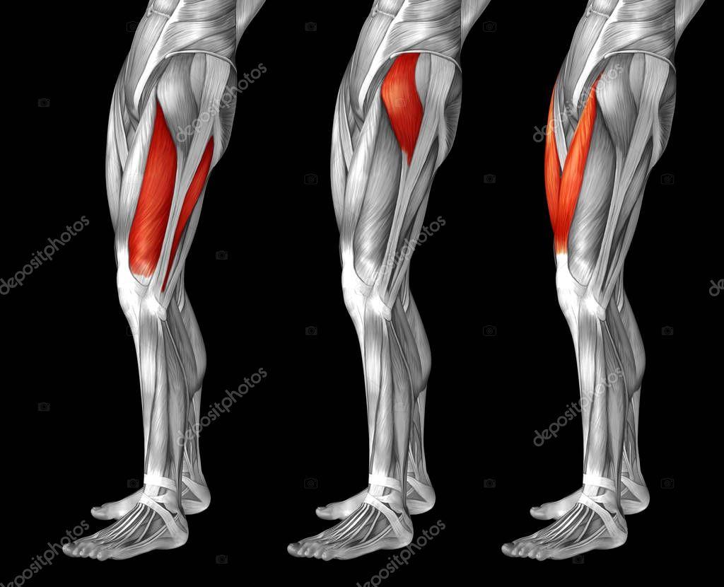 anatomía humana piernas superiores — Foto de stock © design36 #129359096
