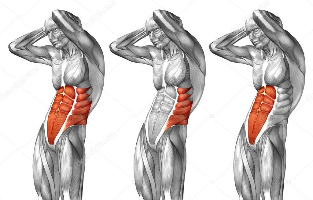 Anatomía del pecho — Fotos de Stock © design36 #129359488