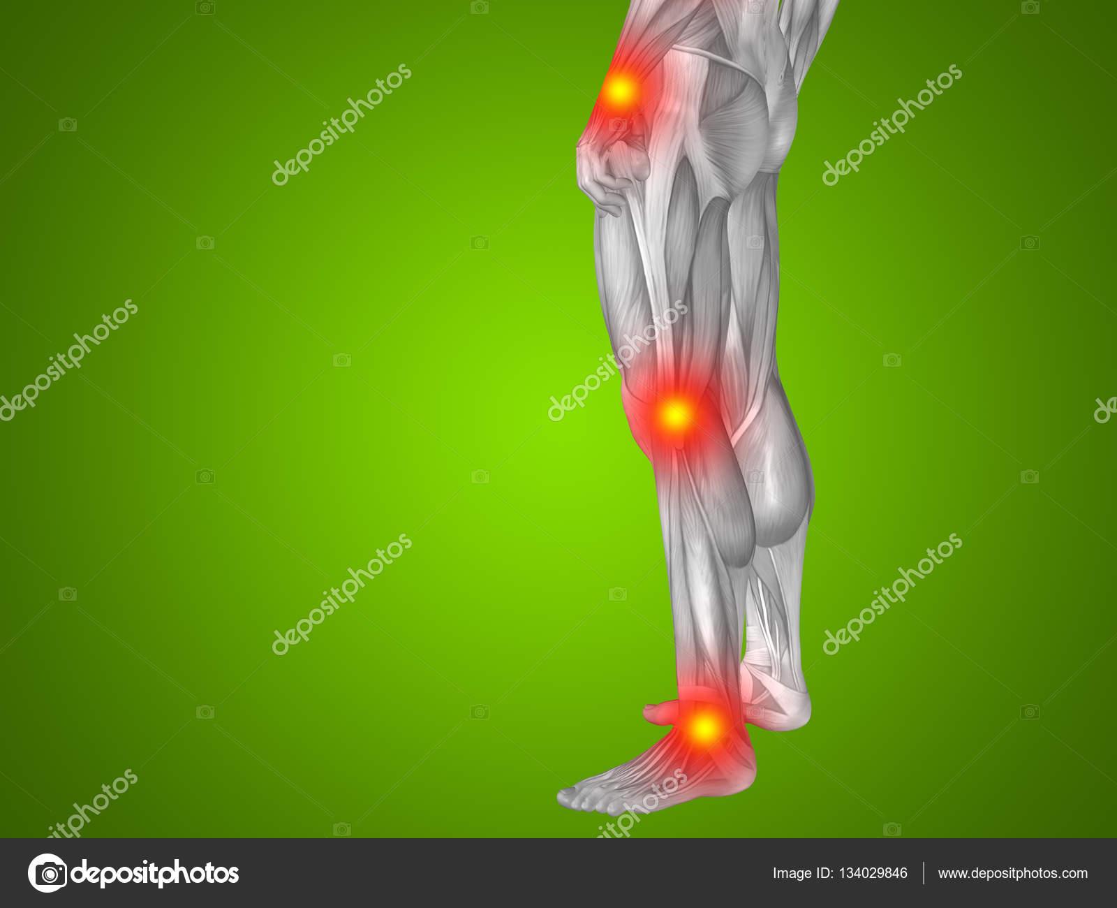 Parte inferior del cuerpo de la anatomía del hombre humano — Foto de ...