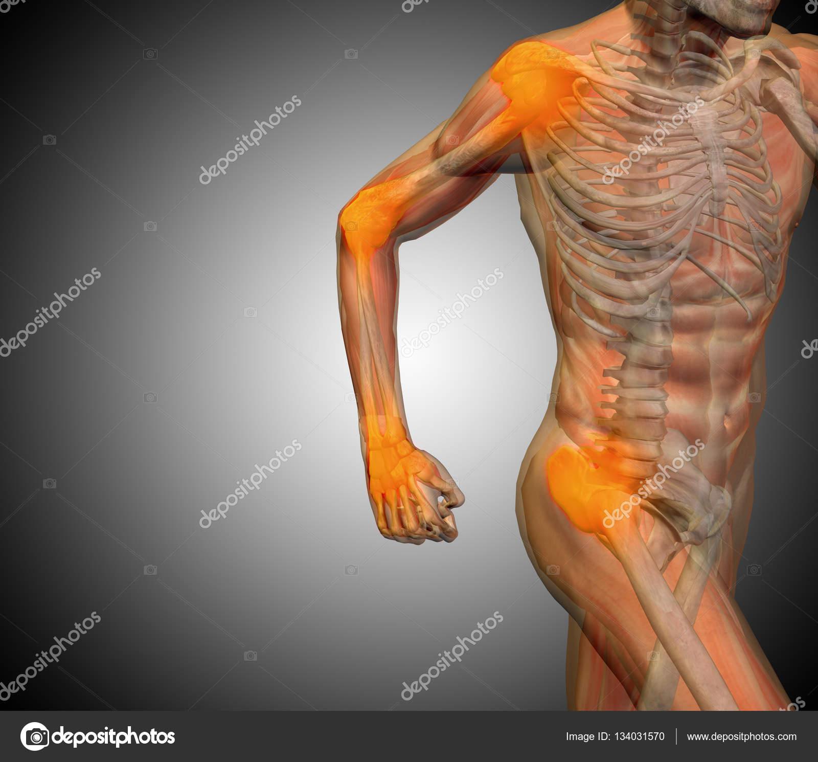 anatomía humana sobre fondo gris — Foto de stock © design36 #134031570