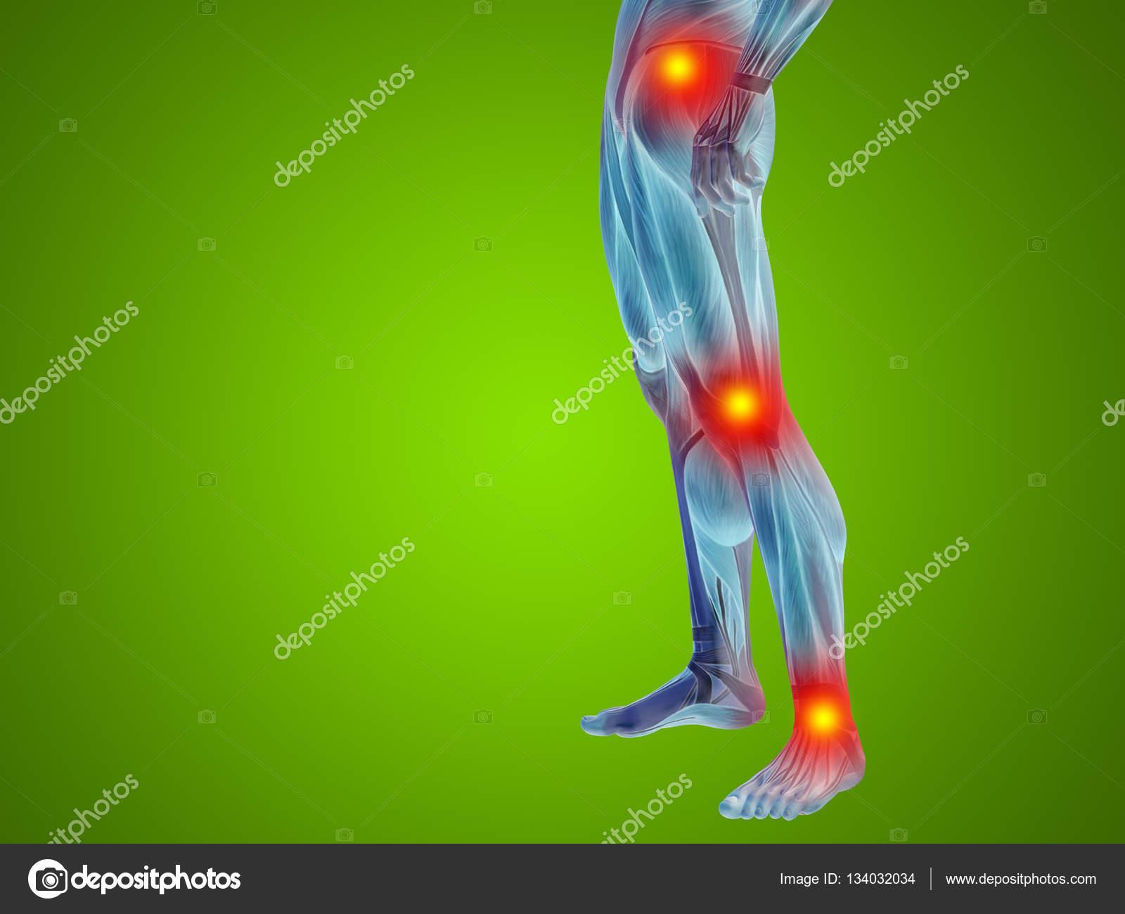 Mann menschlich Anatomie Unterkörper — Stockfoto © design36 #134032034