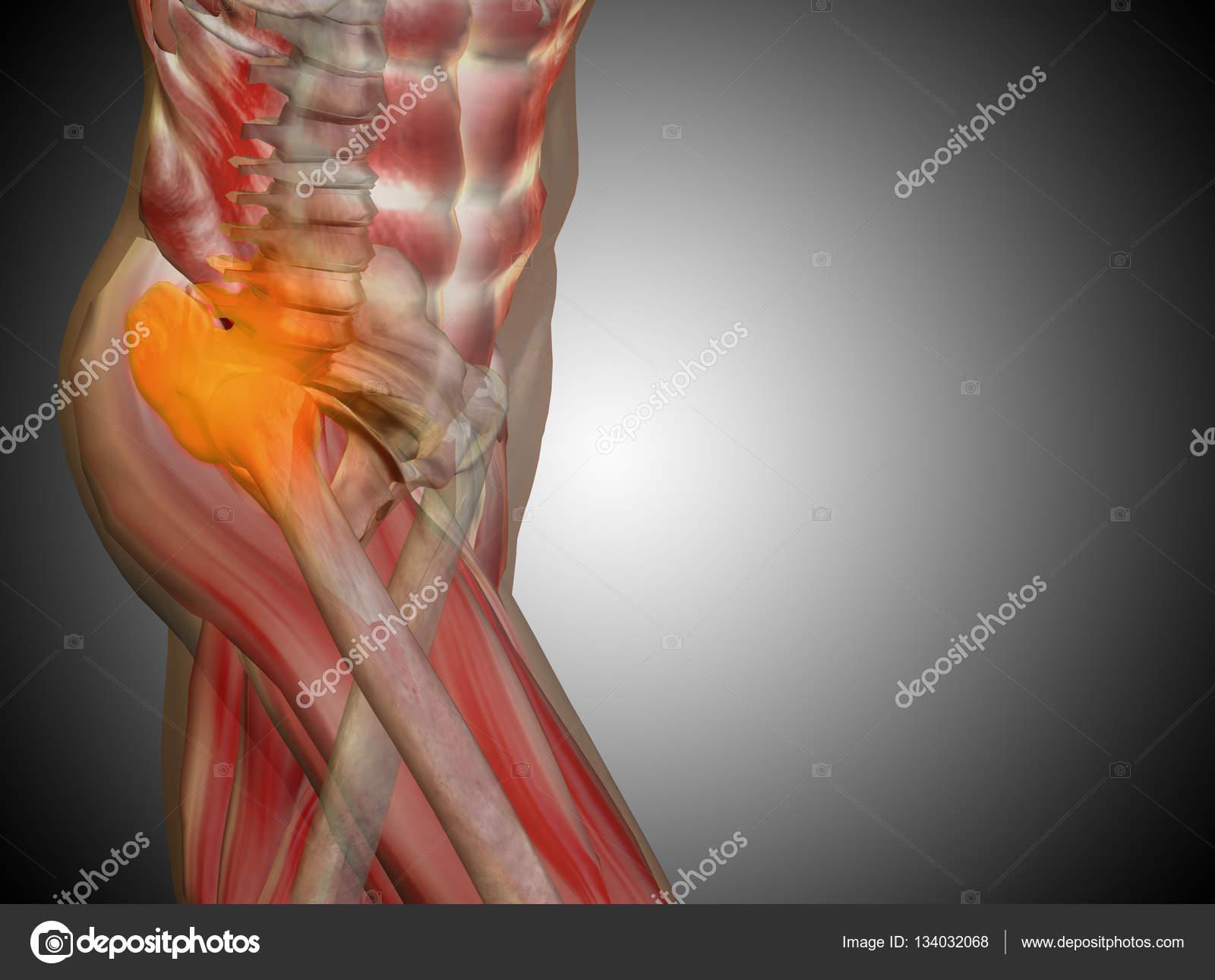 menschliche Anatomie auf grauem Hintergrund — Stockfoto © design36 ...
