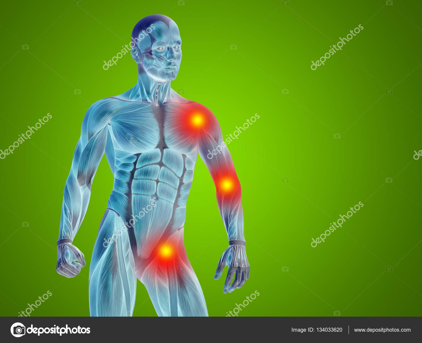 Human Anatomy Upper Body Stock Photo Design36 134033620