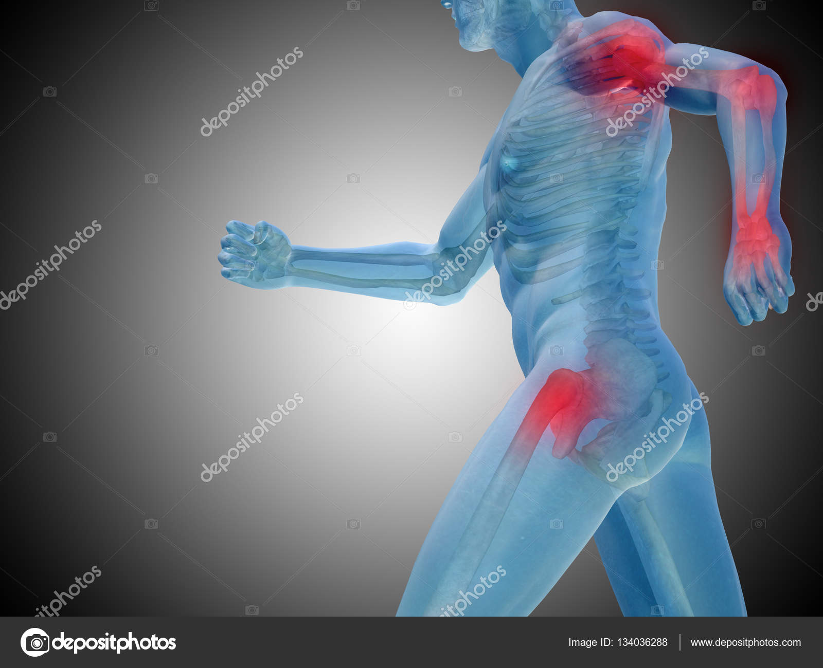 anatomía humana sobre fondo gris — Foto de stock © design36 #134036288
