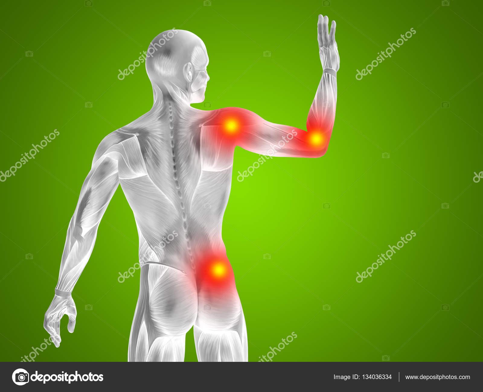 Parte superior del cuerpo humano Anatomía — Fotos de Stock ...