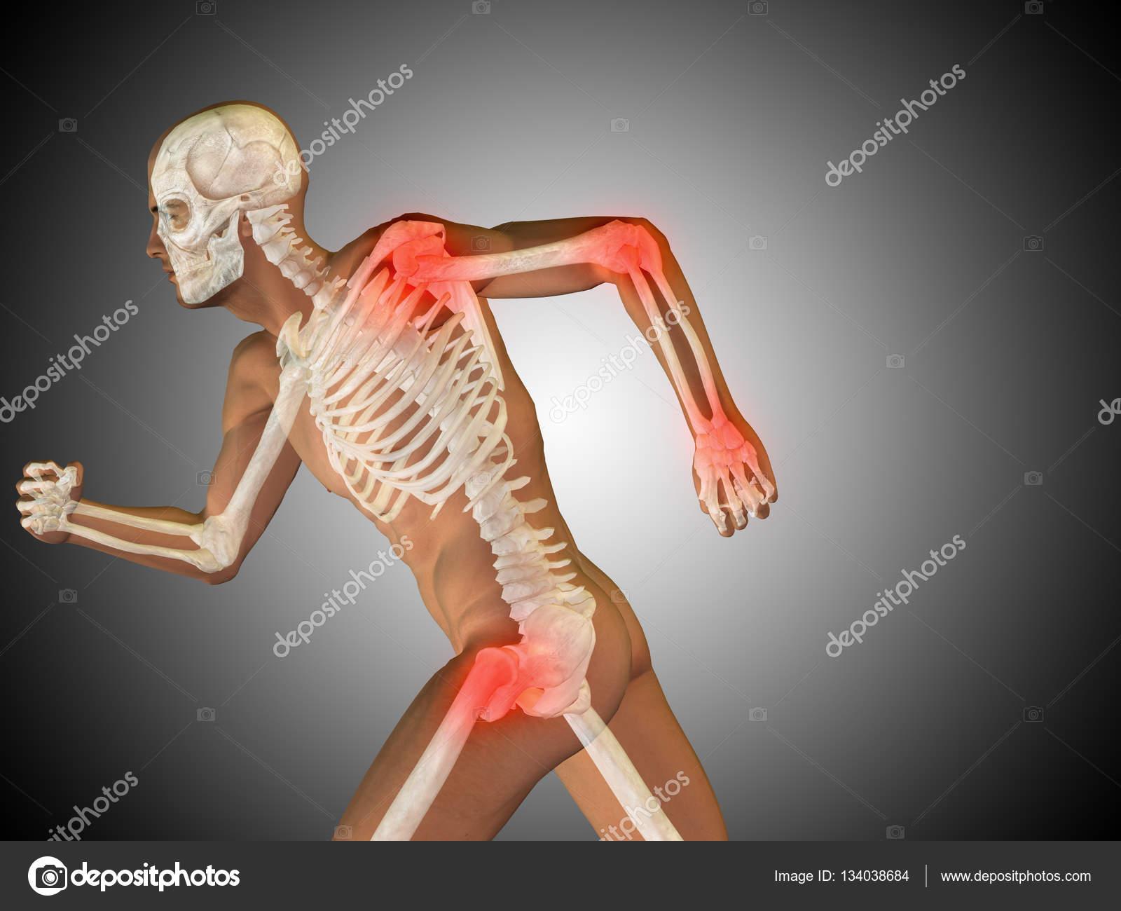 anatomía humana sobre fondo gris — Foto de stock © design36 #134038684