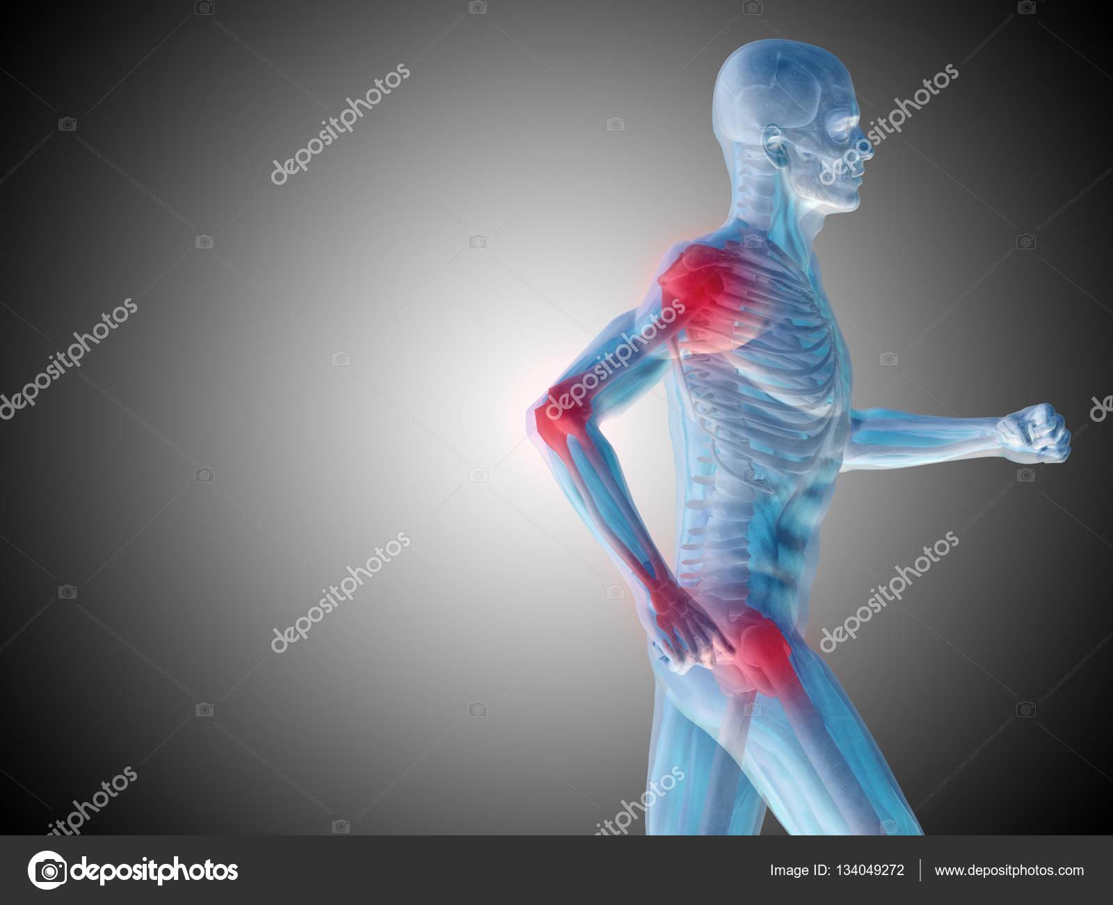 anatomía humana sobre fondo gris — Foto de stock © design36 #134049272