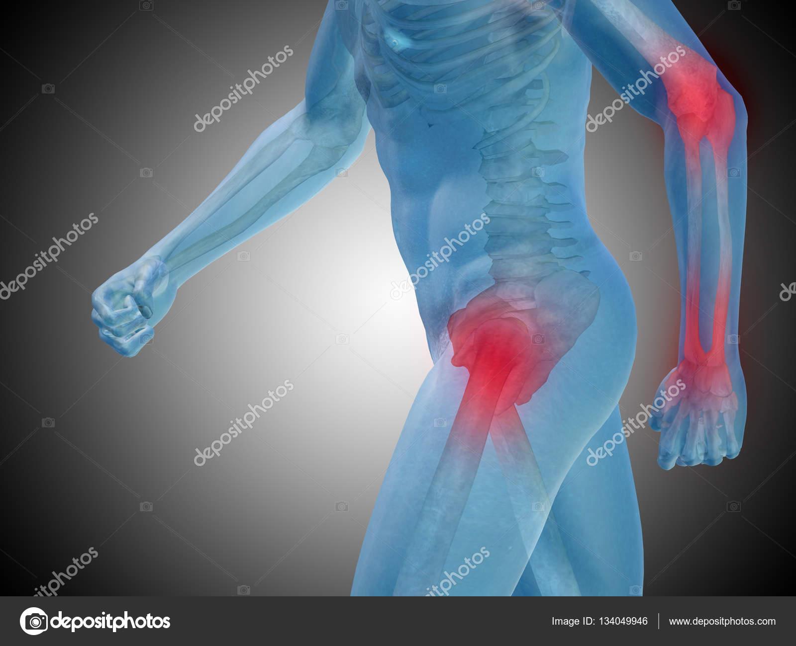 anatomía humana sobre fondo gris — Foto de stock © design36 #134049946