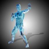 Tělo se svaly silné lidské