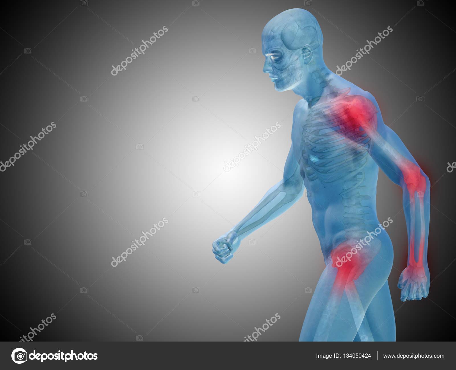 anatomía humana sobre fondo gris — Foto de stock © design36 #134050424