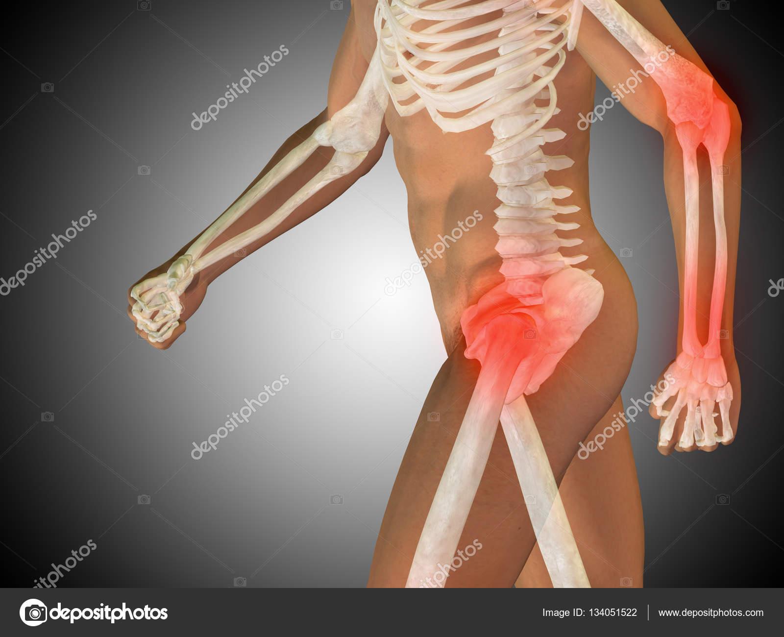 anatomía humana sobre fondo gris — Fotos de Stock © design36 #134051522