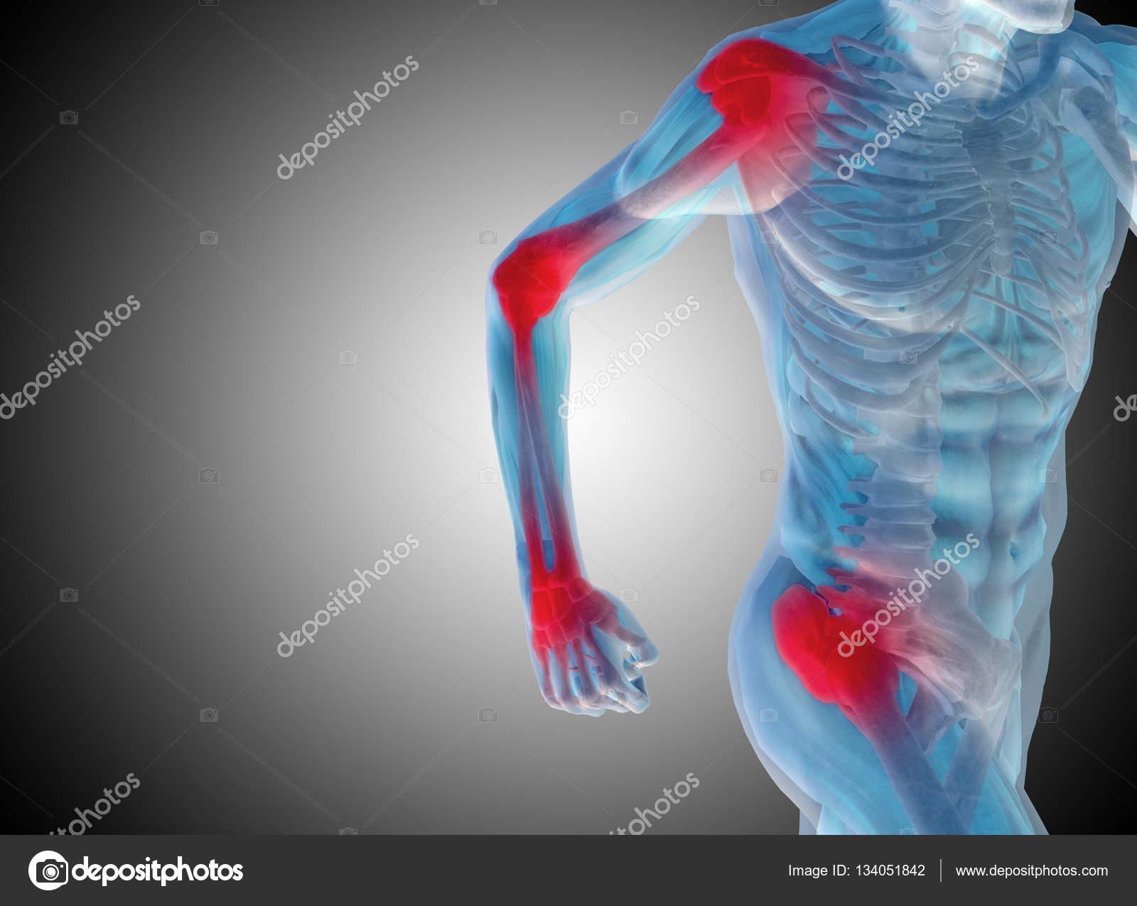 anatomía humana sobre fondo gris — Fotos de Stock © design36 #134051842