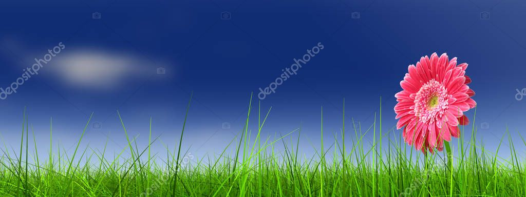 green grass field with flower