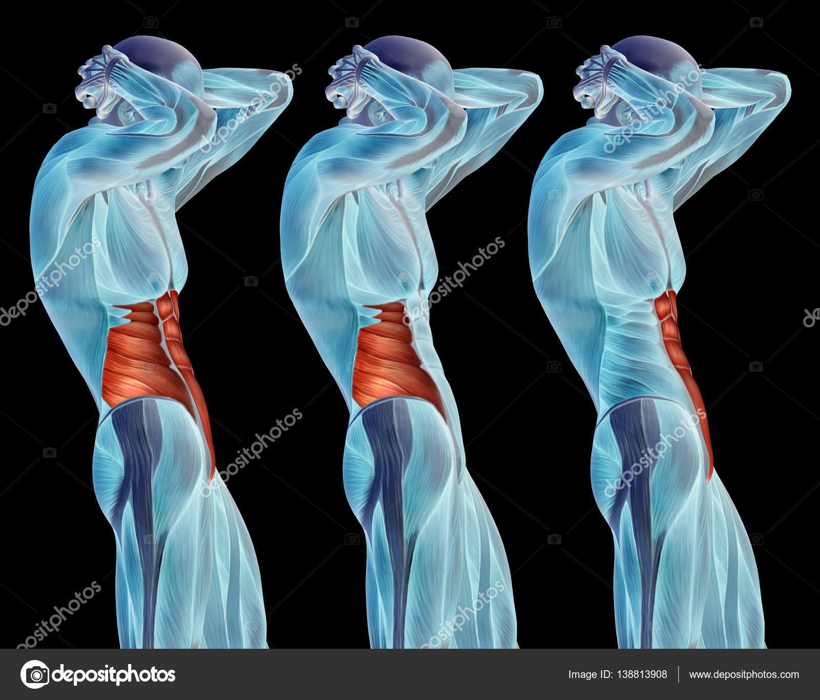 Ilustración de la anatomía del cuerpo humano — Fotos de Stock ...