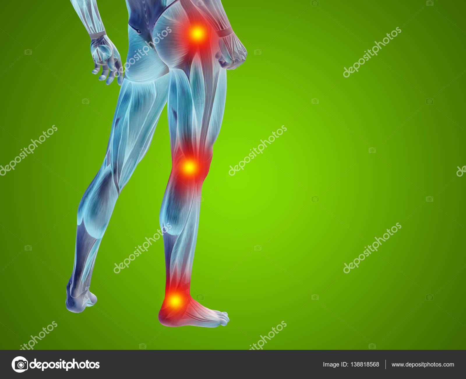 Human Lower Body Anatomy Stock Photo Design36 138818568