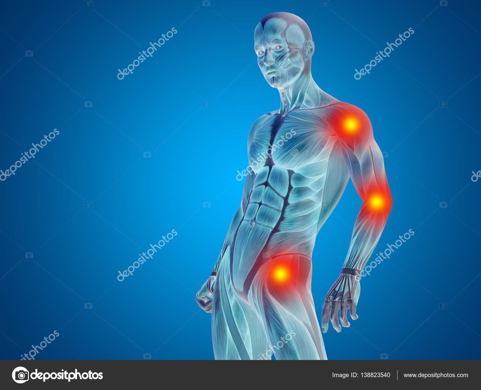 Human Upper Body Anatomy Stock Photo Design36 138823540