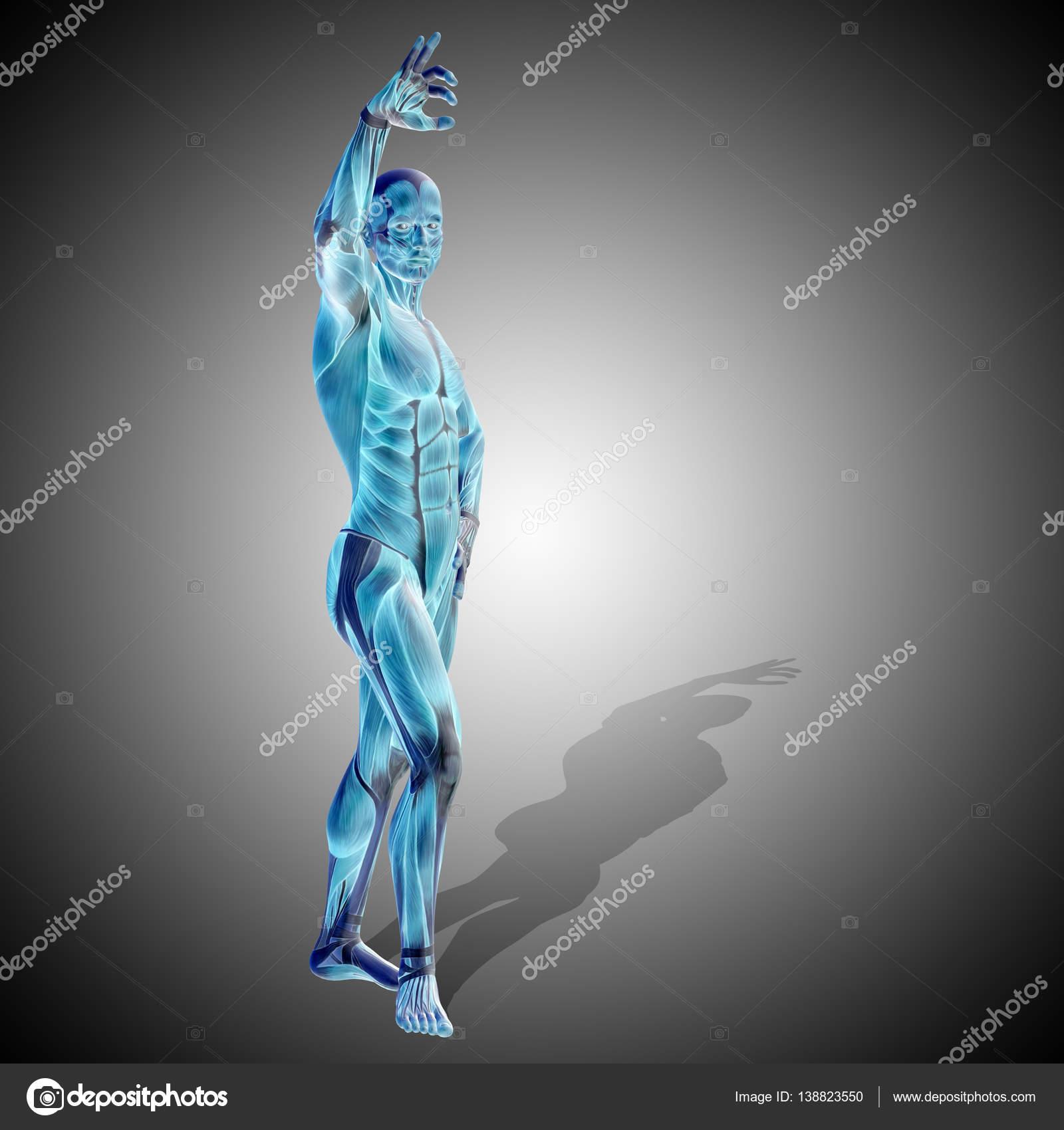 Abbildung der menschlichen Anatomie — Stockfoto © design36 #138823550
