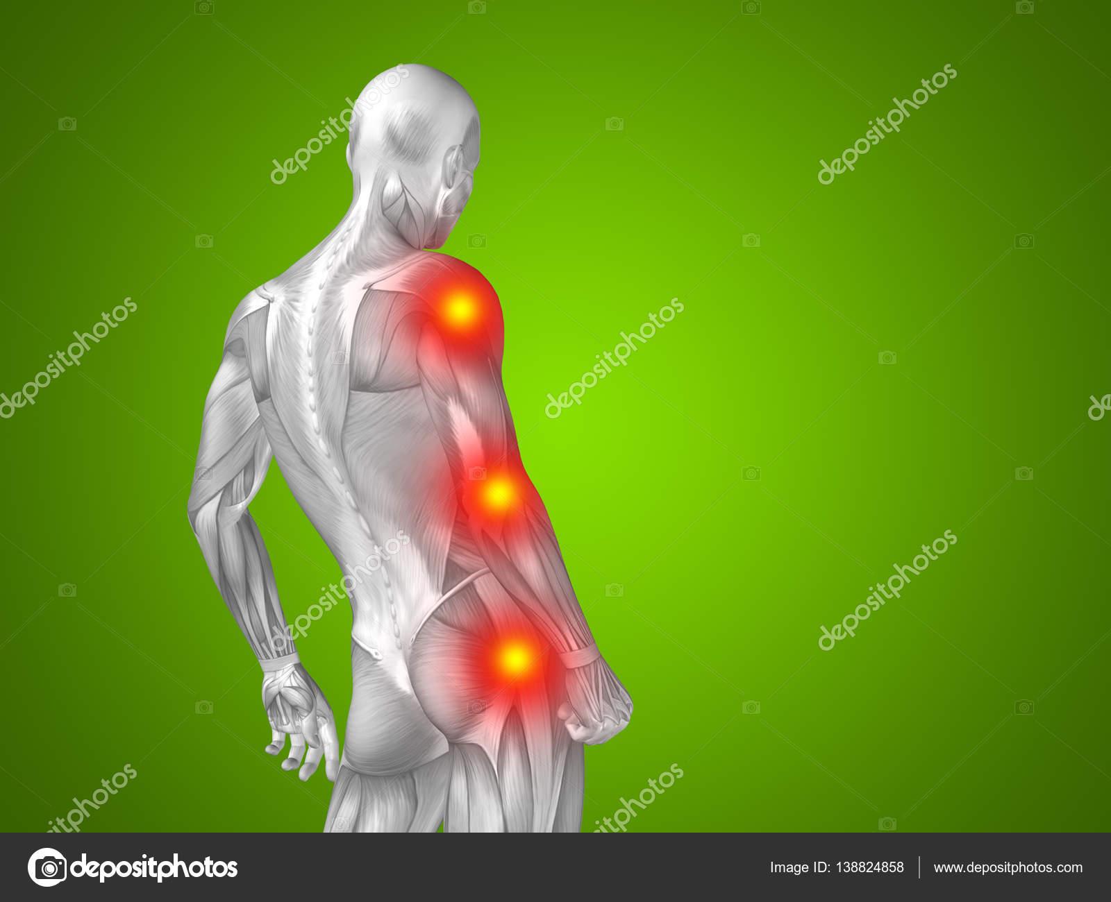 Human Upper Body Anatomy Stock Photo Design36 138824858