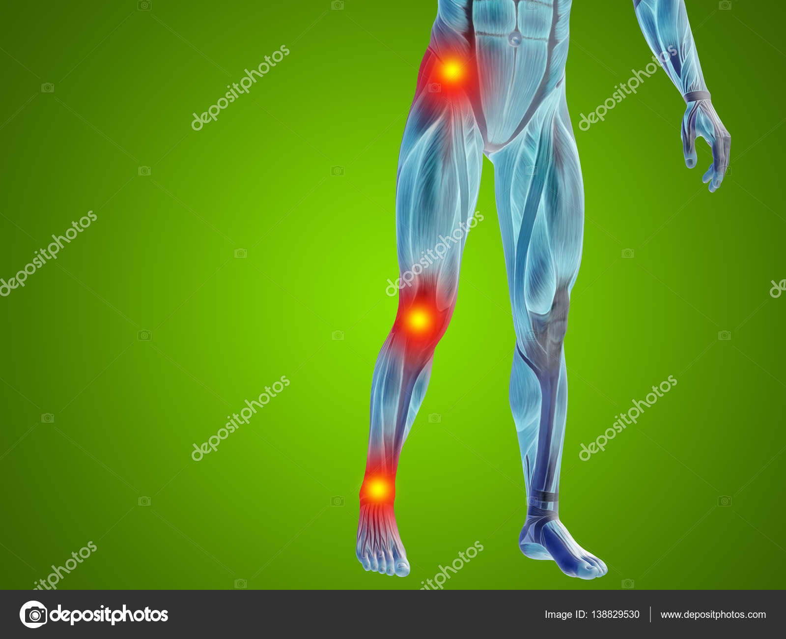 Human Lower Body Anatomy Stock Photo Design36 138829530