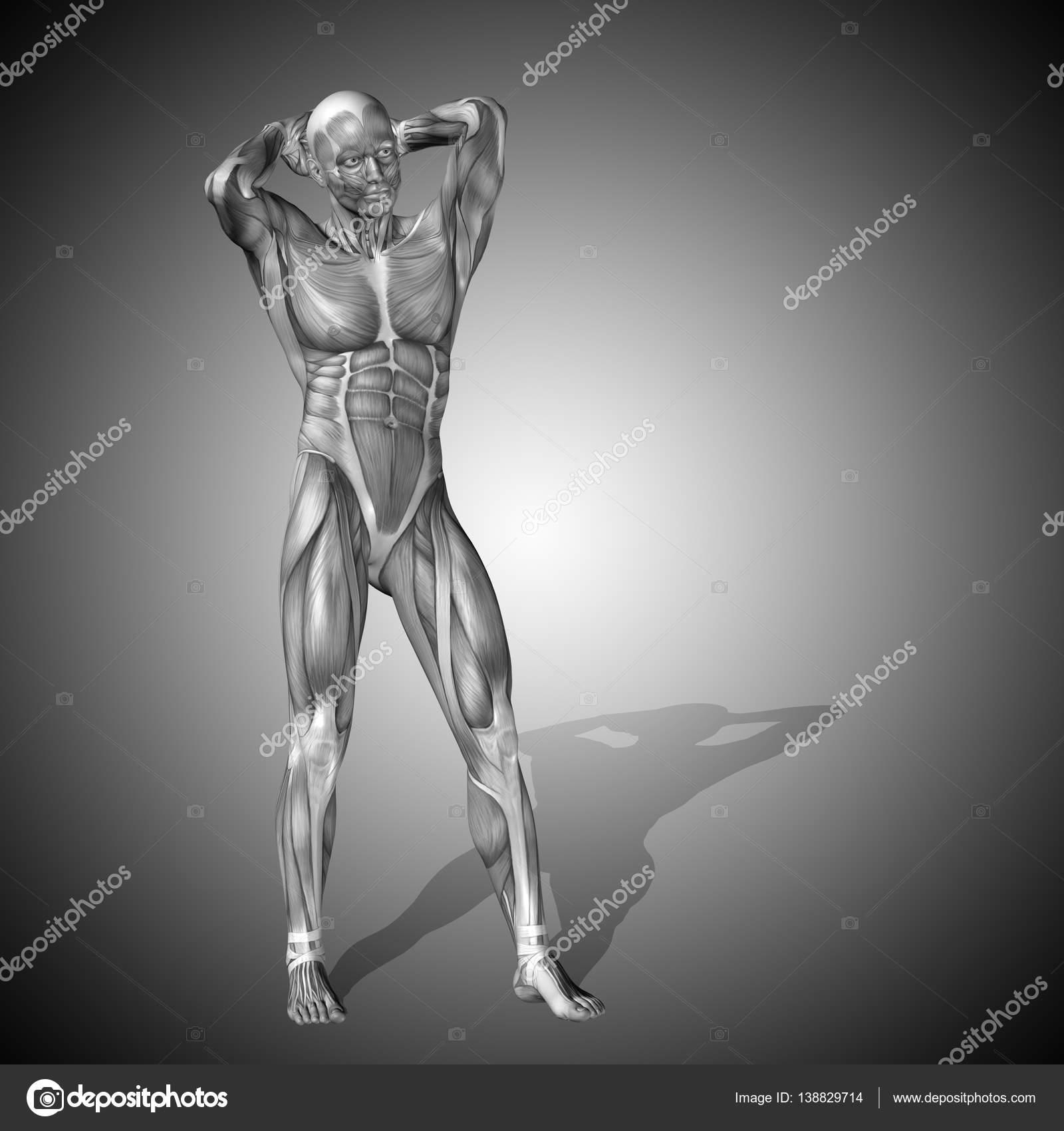 Abbildung der menschlichen Anatomie — Stockfoto © design36 #138829714