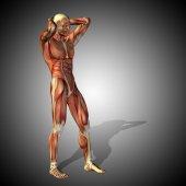 Ilustrace anatomie lidského těla