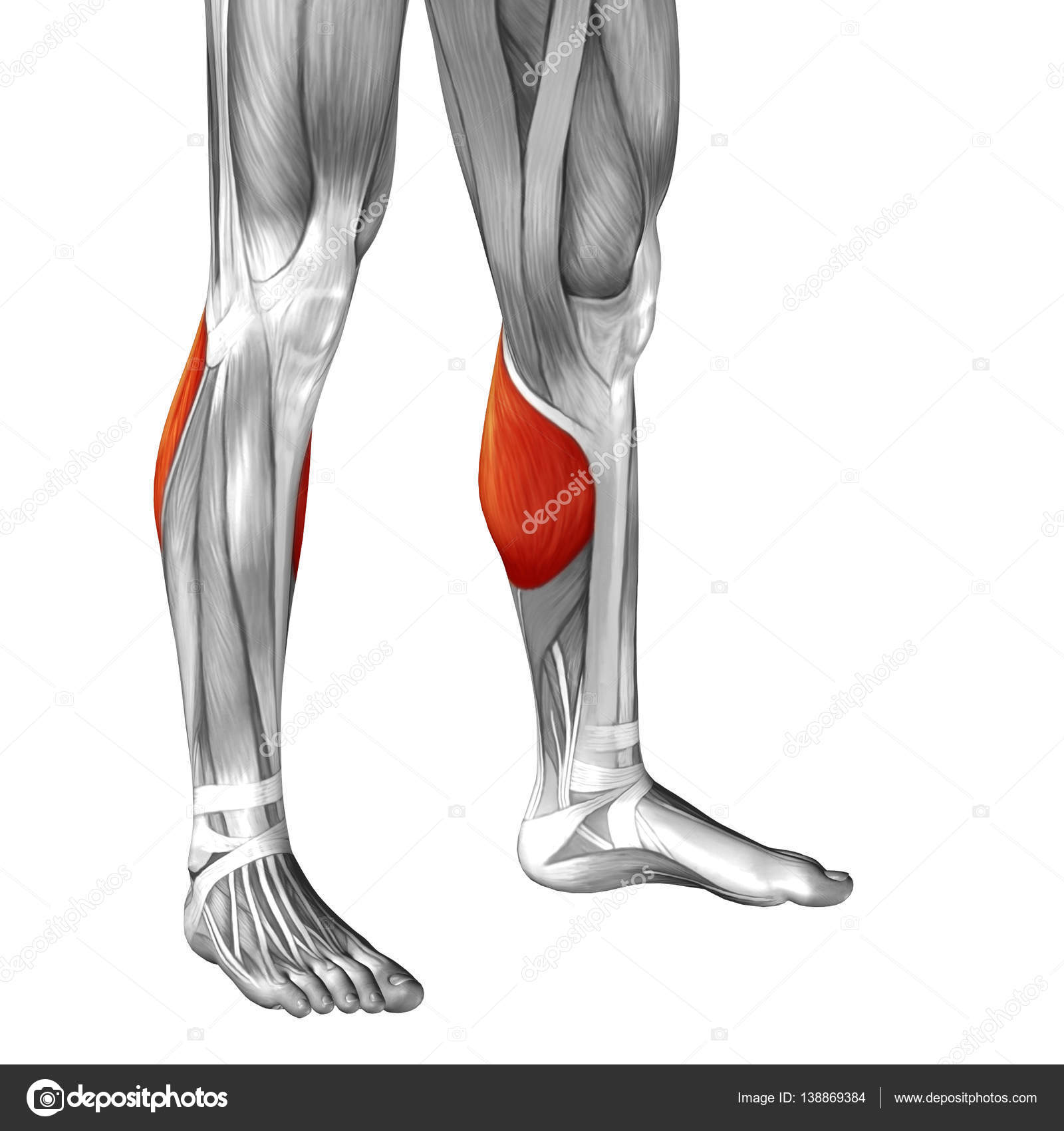human lower leg anatomy — Stock Photo © design36 #138869384