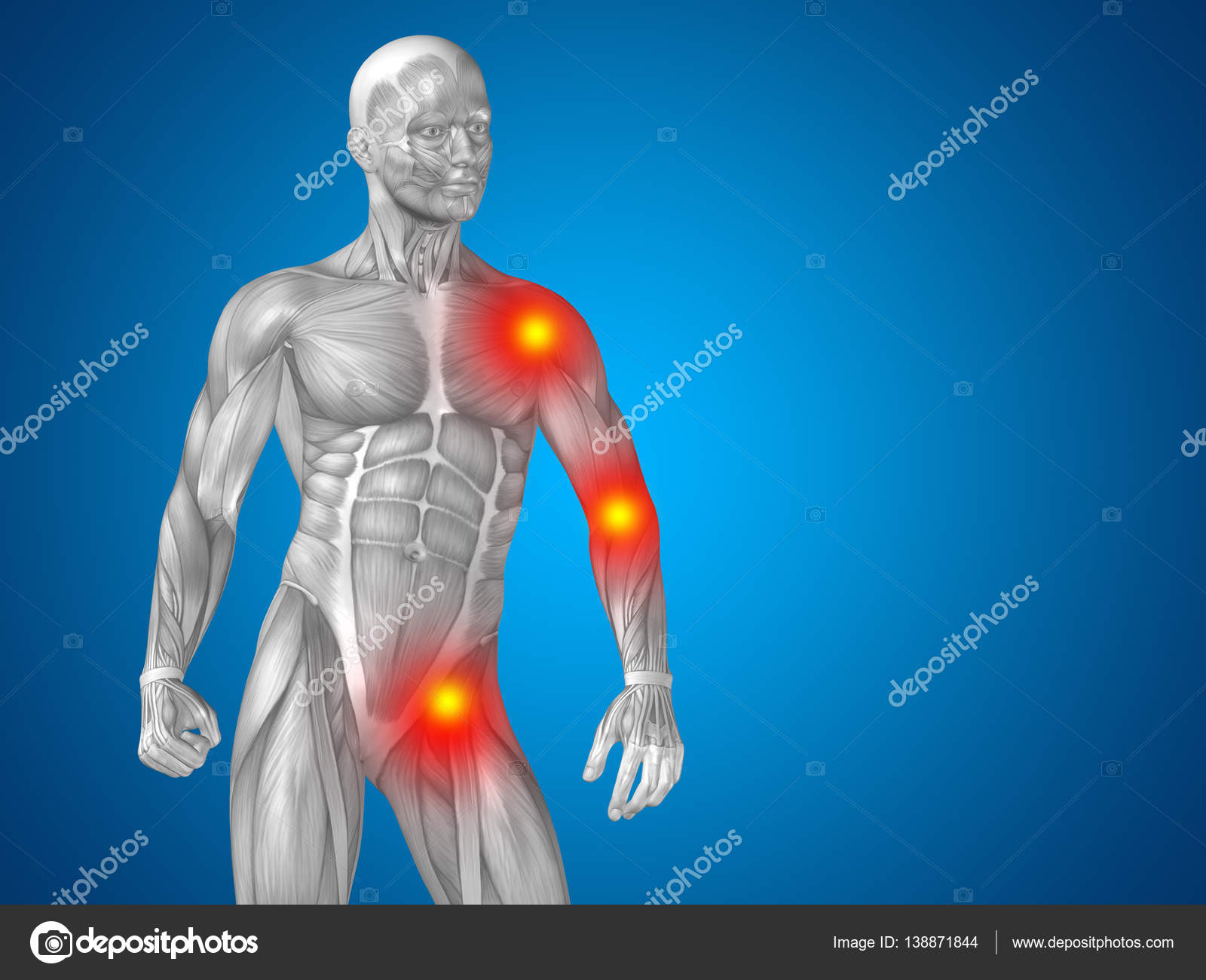 human upper body anatomy — Stock Photo © design36 #138871844