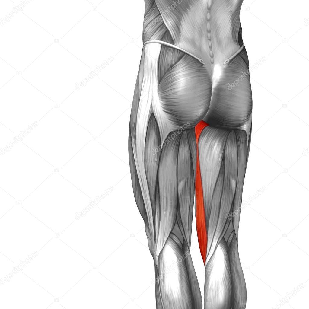 Ausgezeichnet Das Linke Bein Anatomie Bilder - Anatomie Von ...