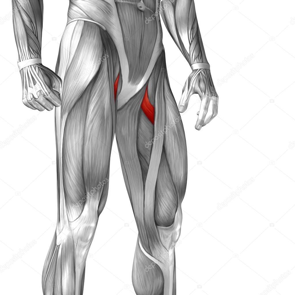 Beste Mri Oberschenkel Anatomie Bilder - Anatomie Ideen - finotti.info