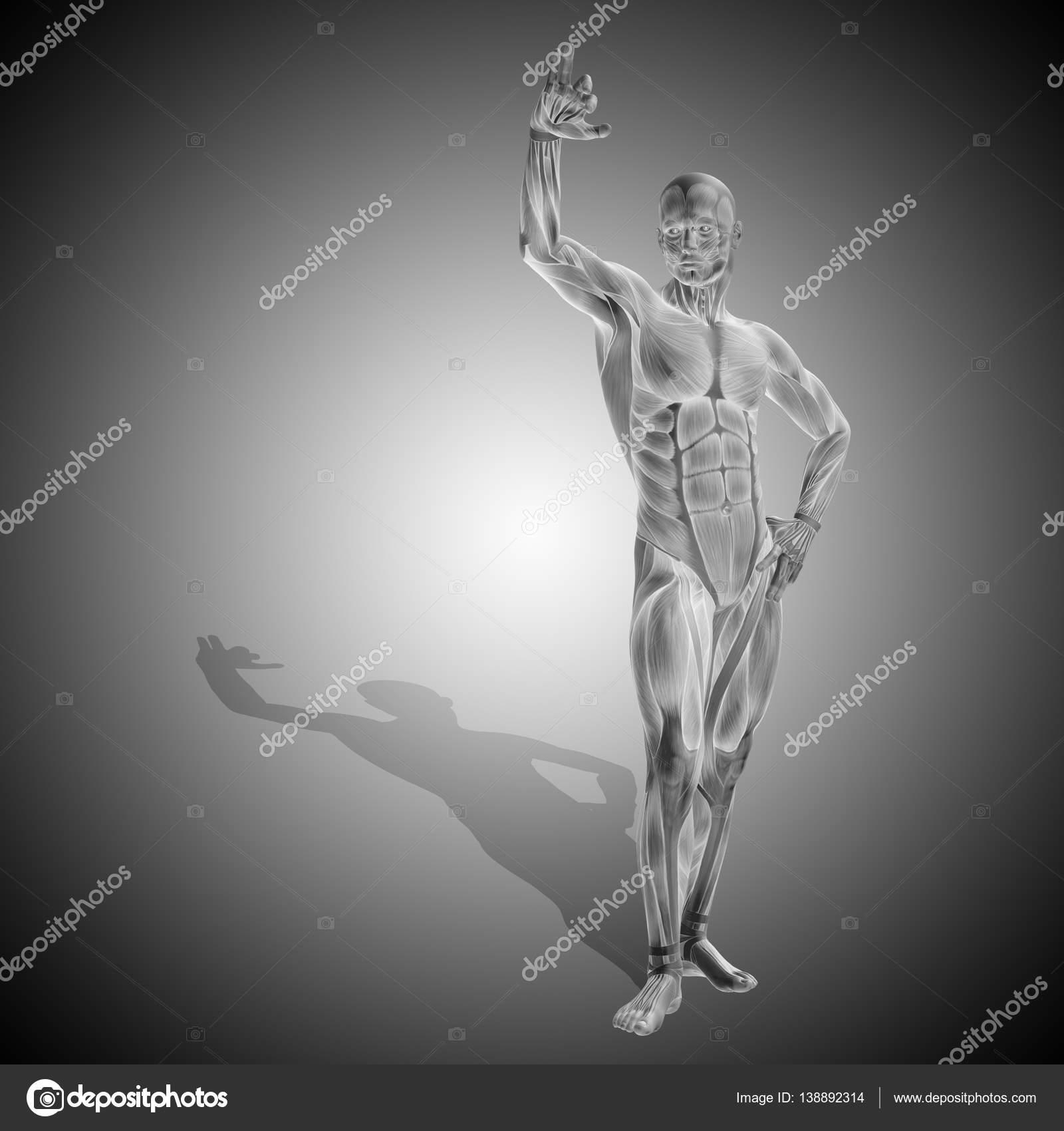 menschlichen Körper Anatomie mit Muskeln — Stockfoto © design36 ...