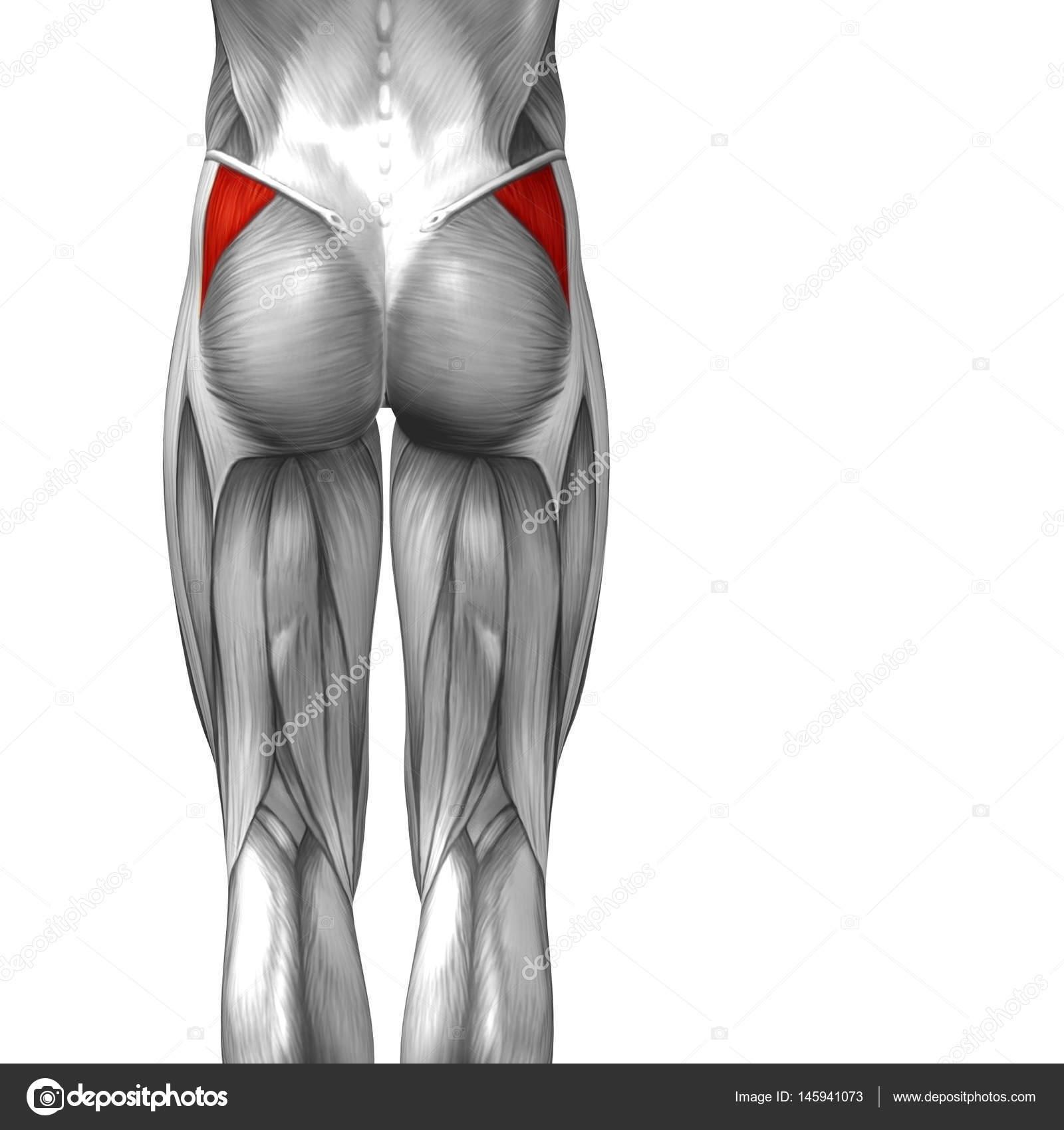 Concepto anatómico 3d ilustración — Foto de stock © design36 #145941073