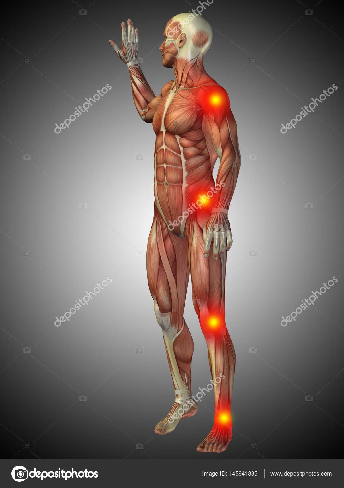 menschliche Anatomie Modell — Stockfoto © design36 #145941835