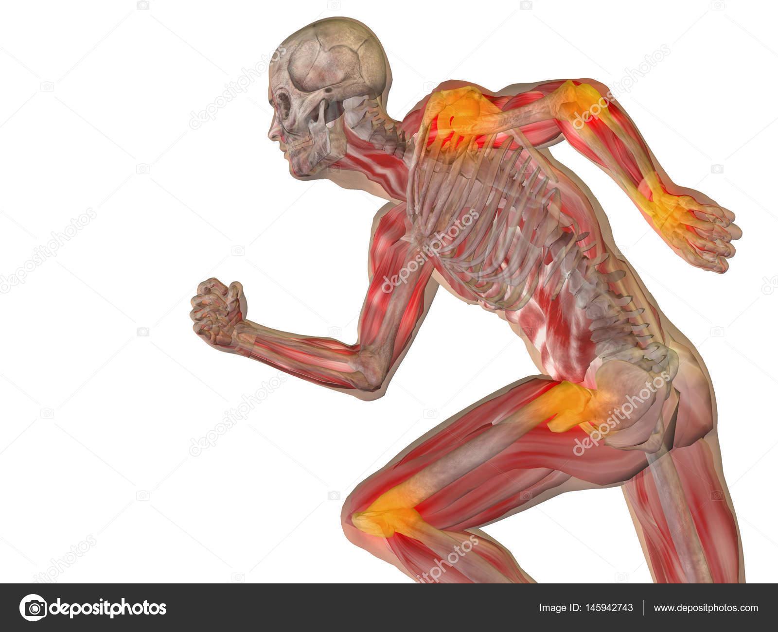 menschliche Anatomie Modell — Stockfoto © design36 #145942743