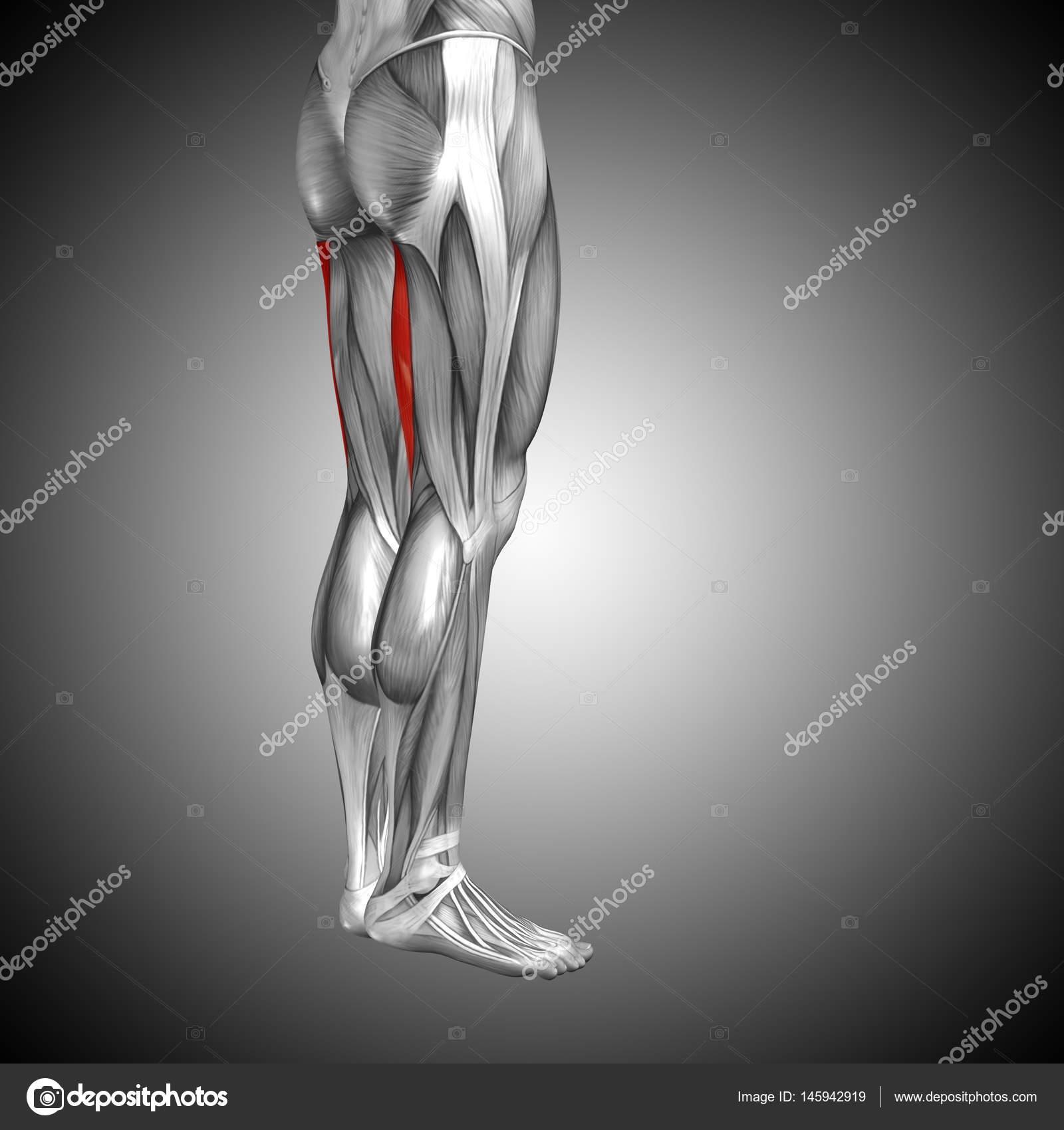 Concepto anatómico 3d ilustración — Fotos de Stock © design36 #145942919