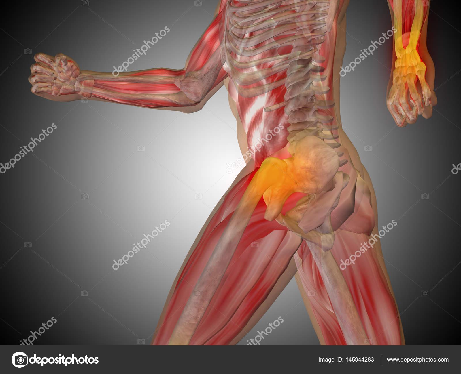 modelo de anatomía humana — Foto de stock © design36 #145944283