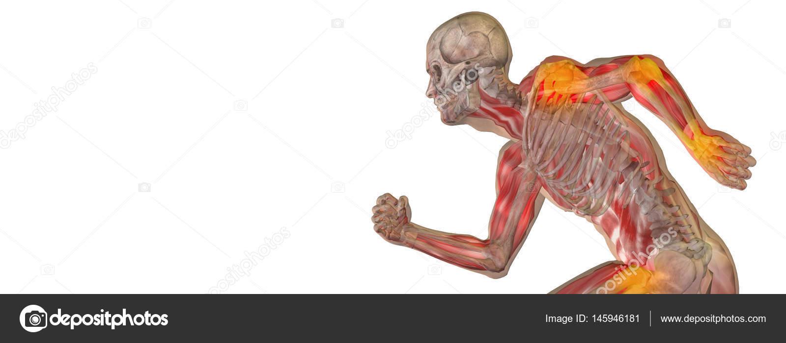 menschliche Anatomie Modell — Stockfoto © design36 #145946181