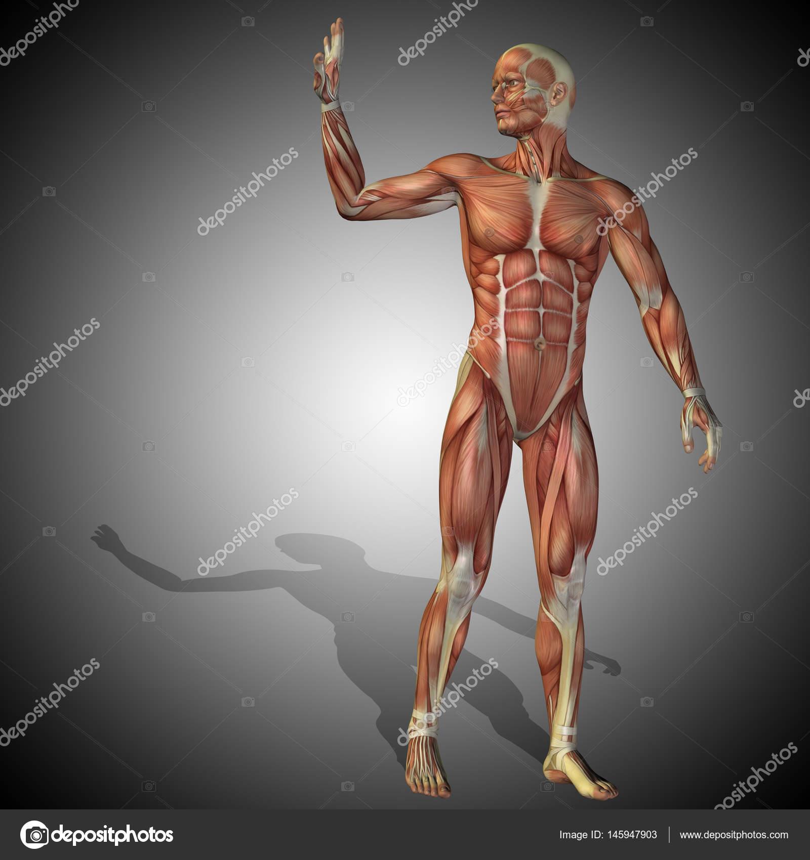 Concepto de anatomía humana — Foto de stock © design36 #145947903