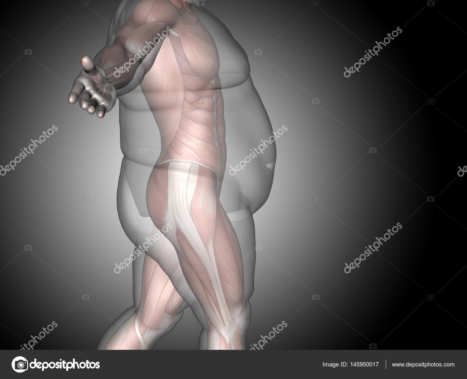 3D Fett Übergewicht vs. schlank fit Diät — Stockfoto