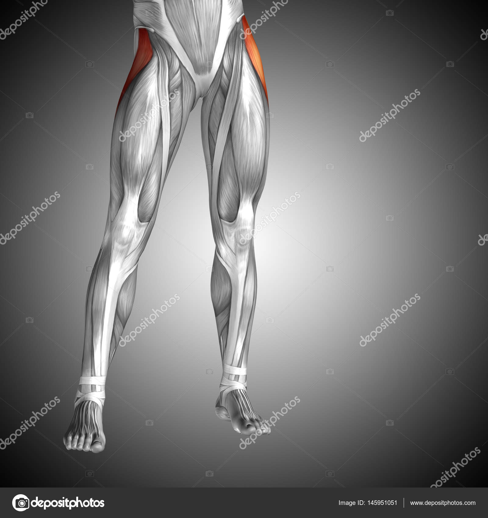 Concepto anatómico 3d ilustración — Foto de stock © design36 #145951051