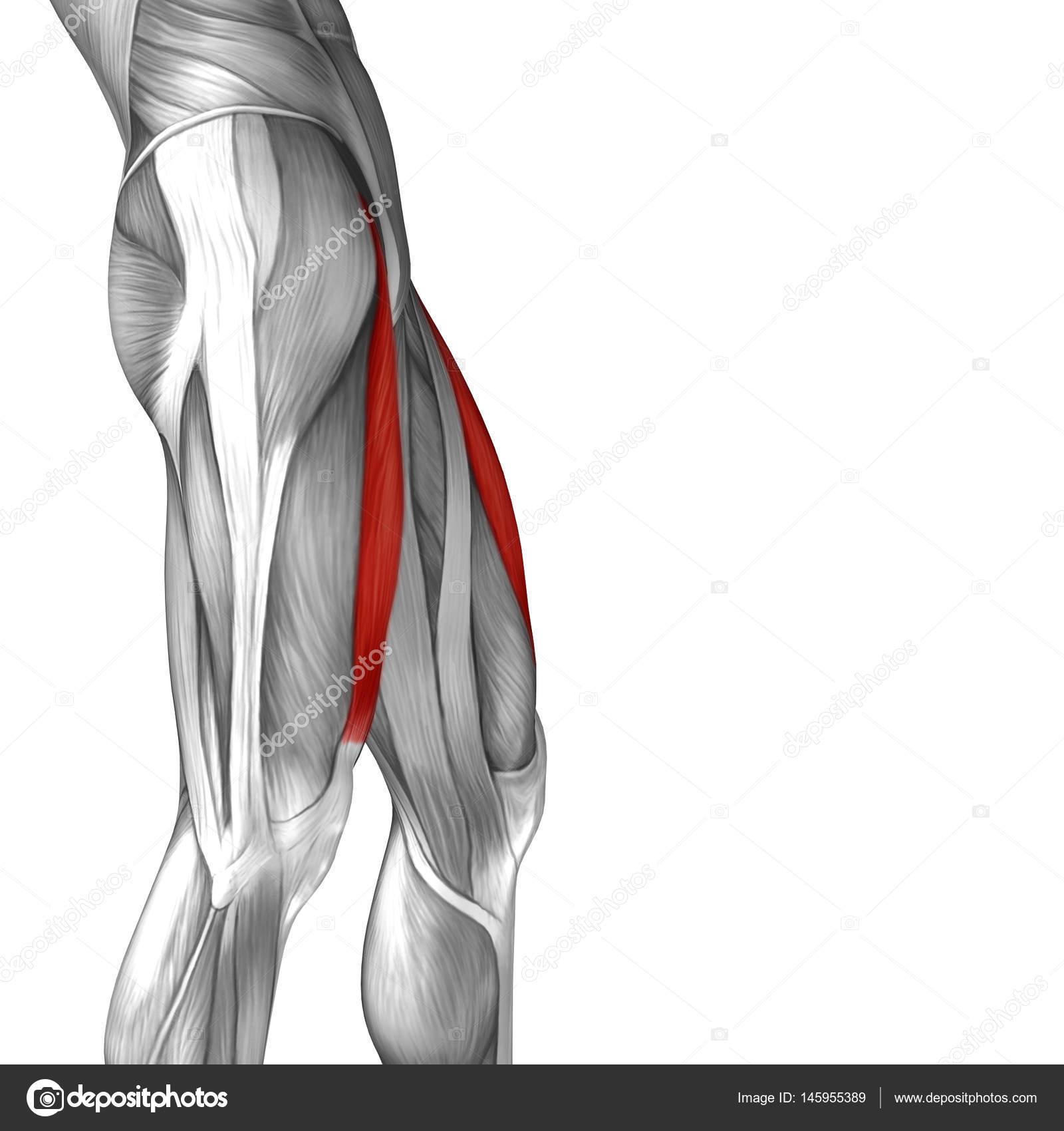 Anatomische Concept 3d illustratie — Stockfoto © design36 #145955389