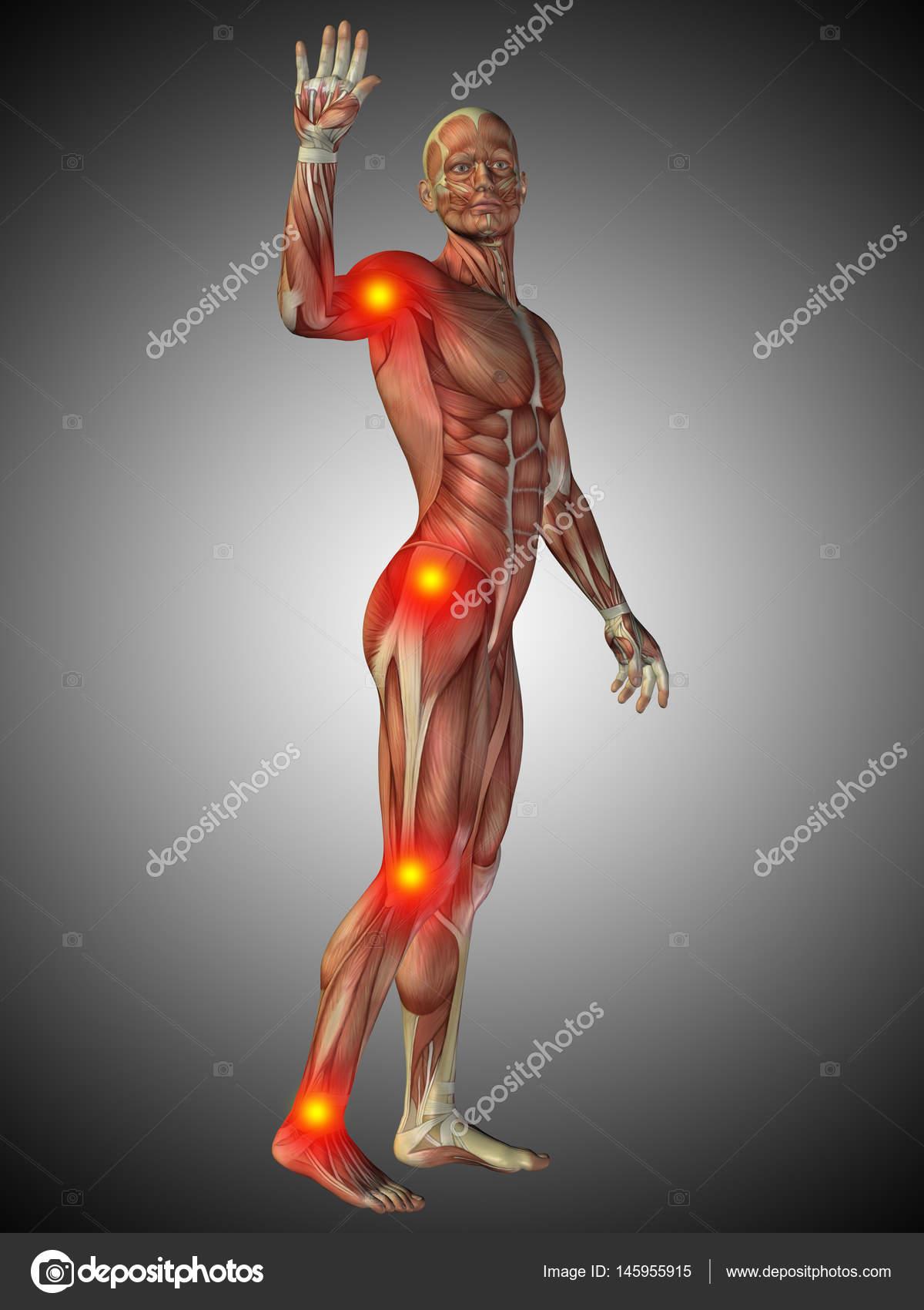menschliche Anatomie Modell — Stockfoto © design36 #145955915