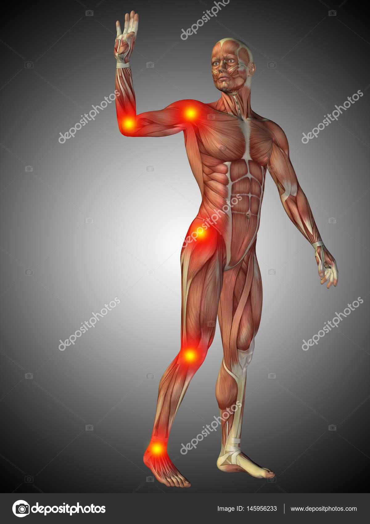 menschliche Anatomie Modell — Stockfoto © design36 #145956233