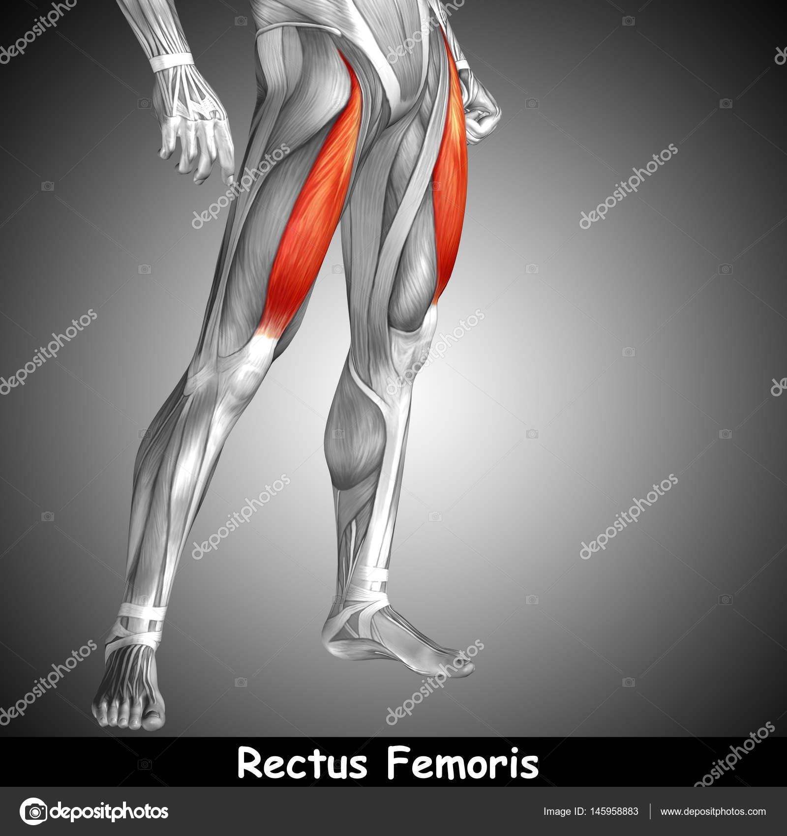 Concepto anatómico 3d ilustración — Foto de stock © design36 #145958883
