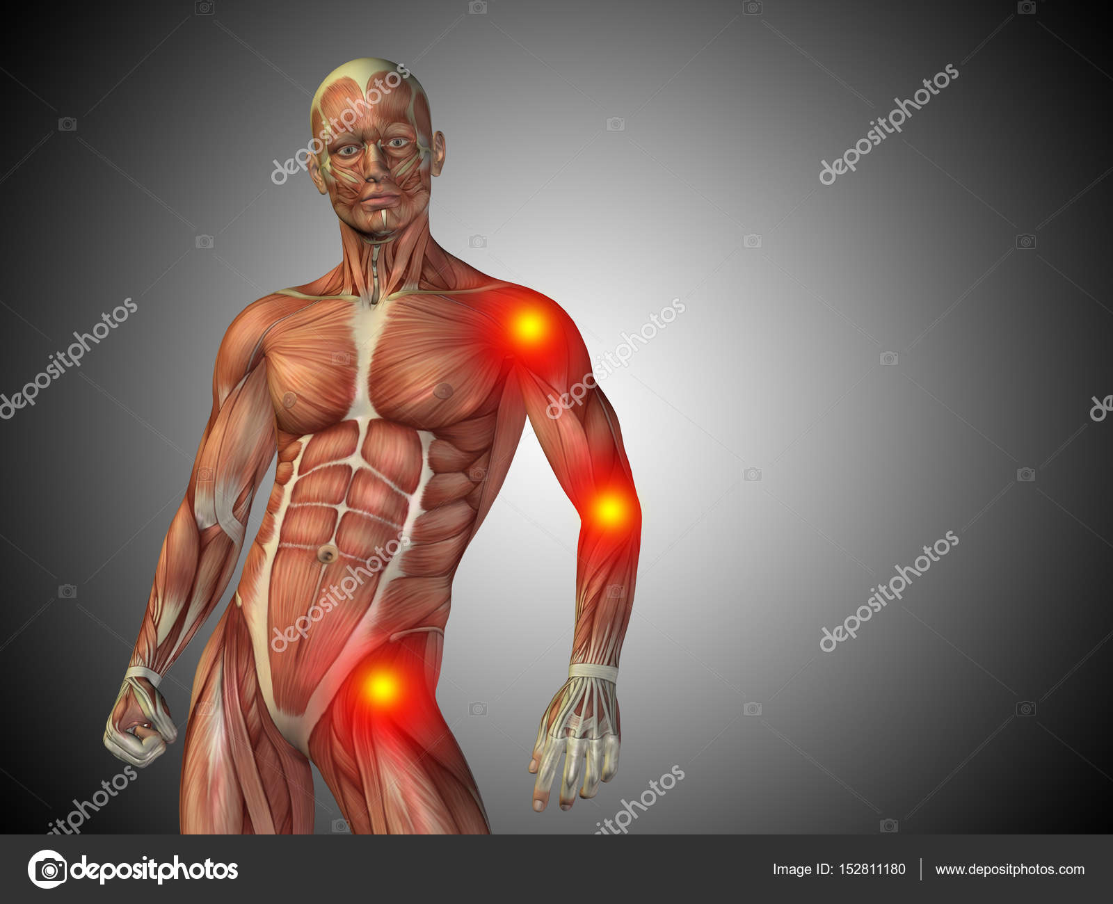male upper body anatomy — Stock Photo © design36 #152811180