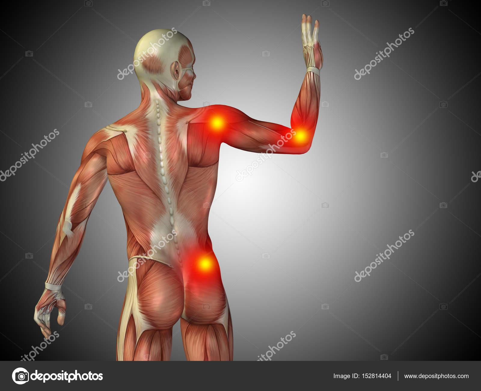 Anatomía de torso masculino — Fotos de Stock © design36 #152814404