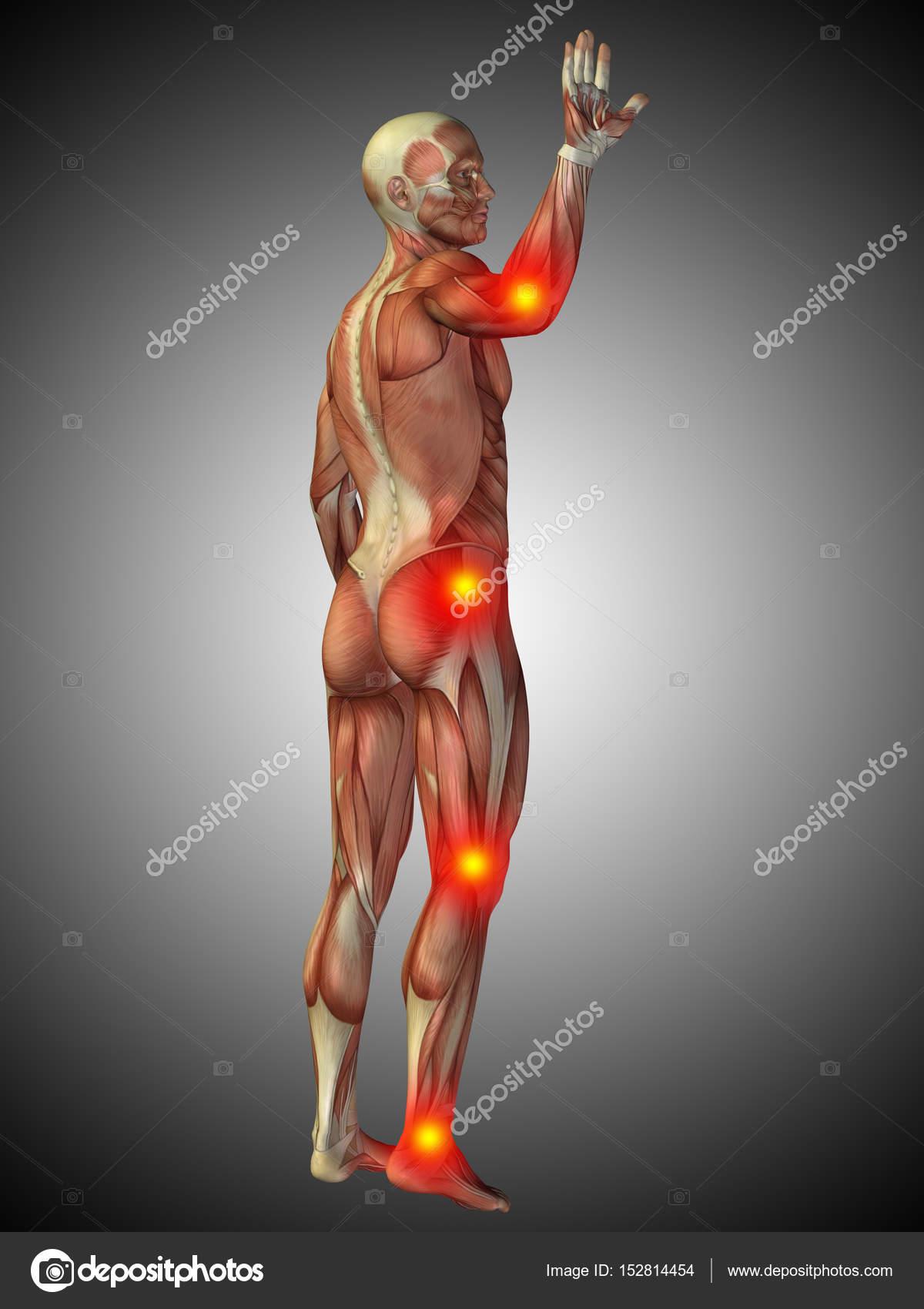 imágenes del cuerpo humano y sus partes por dentro anatomía del